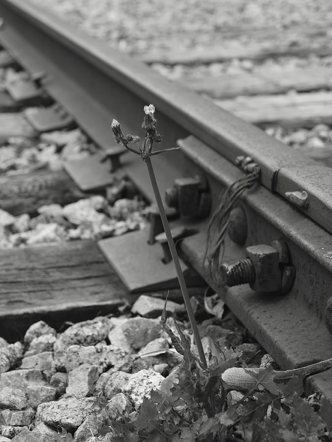 Weed Photograph - The Tenacity Of Nature Greyscale by MM Anderson