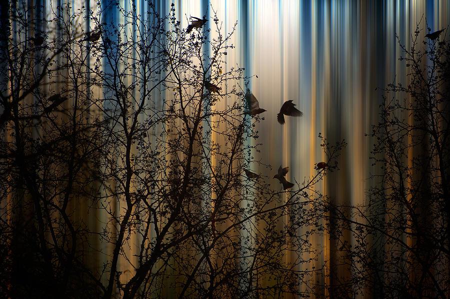 The Thorn Birds Photograph by Marek Czaja