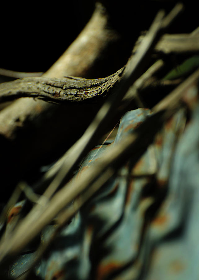 Thread Photograph - The Thread by Rebecca Sherman