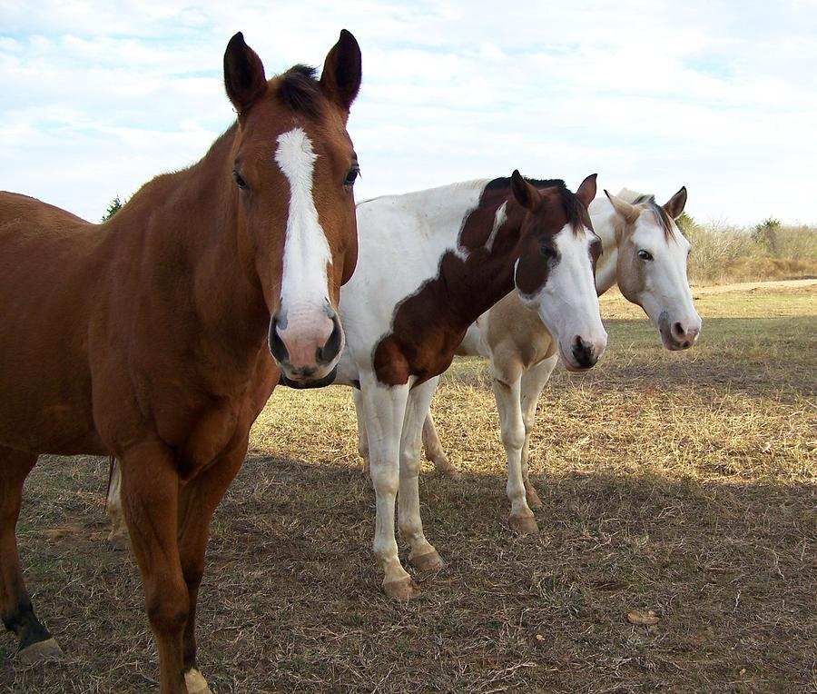 Horse Photograph - The Three Amigos by Cherie Haines