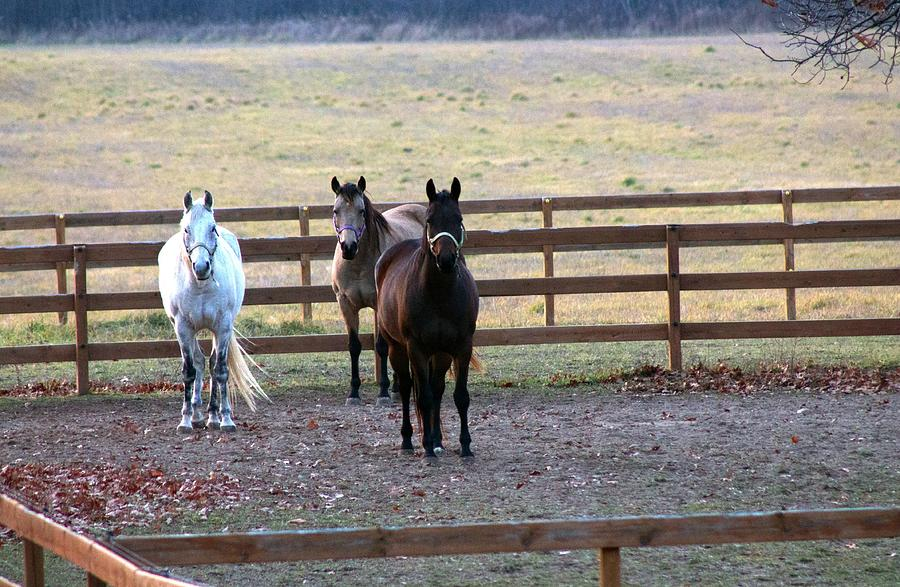 The Photograph - The Three Amigos by Rhonda Humphreys