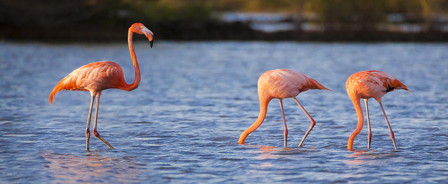 3scape Photograph - The Three Flamingos by Adam Romanowicz