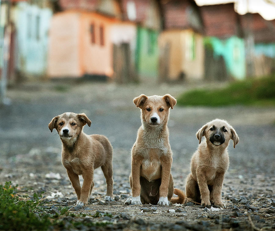 Animals Photograph - The Three Musketeers by Sorin Onisor