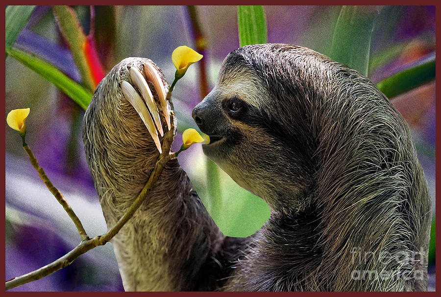 Sloth Photograph - The Three-toed Sloth by Gary Keesler
