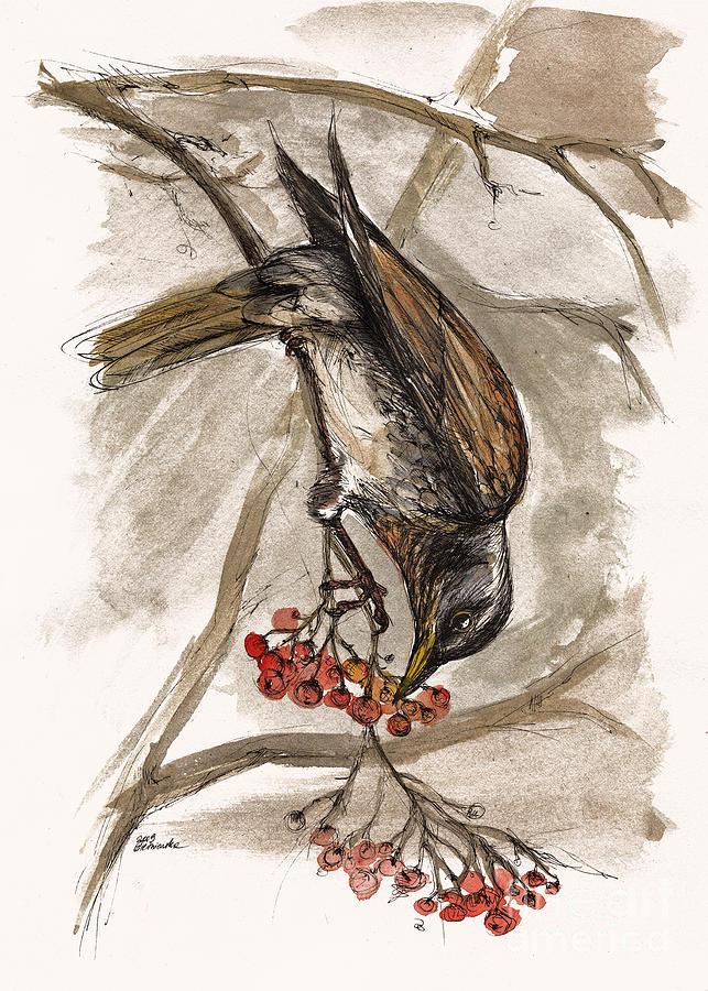 Thrush Painting - The Thrush Eating Cranberries by Angel Ciesniarska