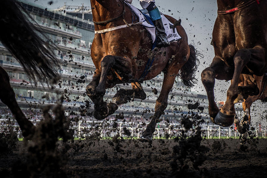 Hooves Photograph - The Thunder Of The Hooves by Sharon Lee Chapman