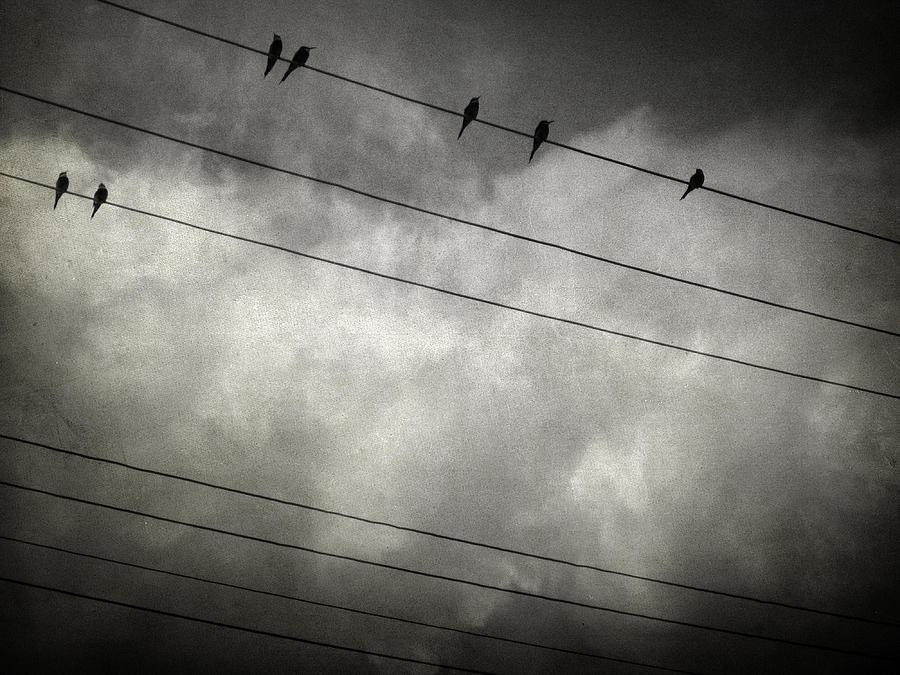 Bird Photograph - The Trace 11.24 by Taylan Apukovska