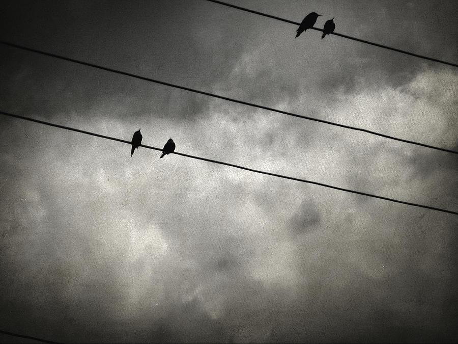 Birds On A Wire Photograph - The Trace 11.25 by Zapista Zapista