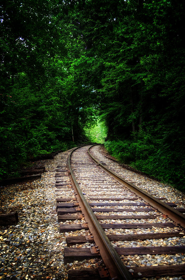 The Tracks Through The Woods by Greg Mimbs