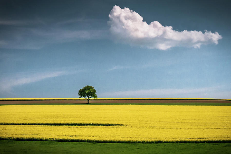 Tree Photograph - The Tree And The Cloud by Andreas Wonisch