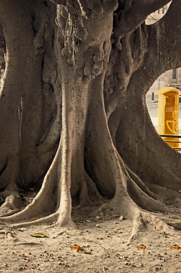 Tree Photograph - The Tree And The Post Box by Mary Machare