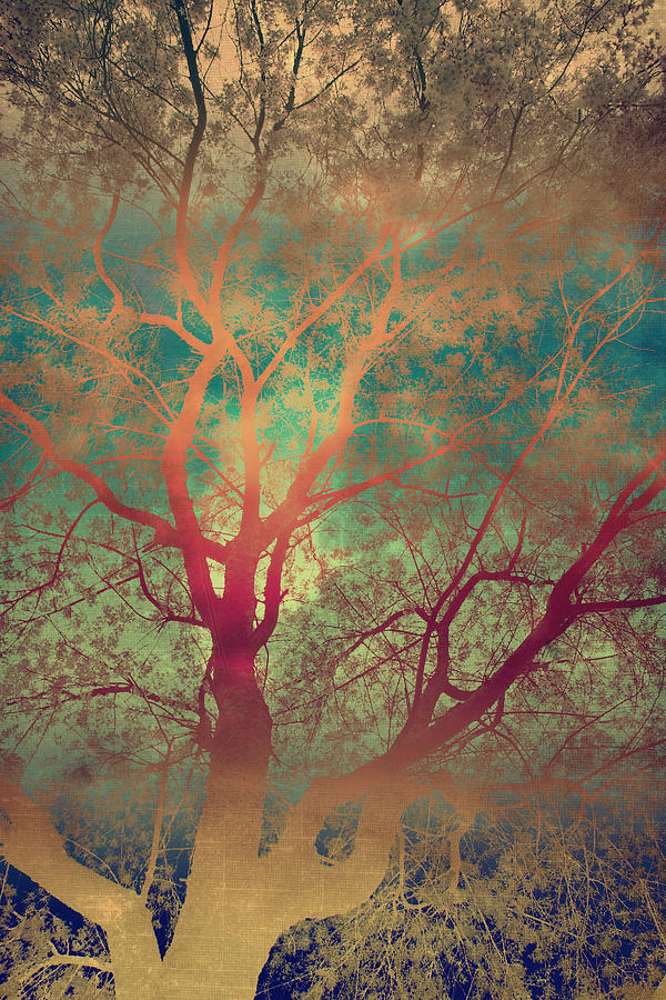 Tree Silhouette Photograph - The Tree Called Beautiful by Gray  Artus