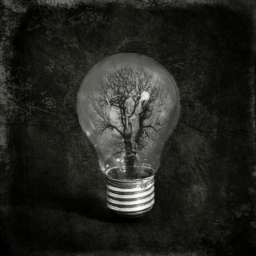 Tree Photograph - The Tree by Igor Genovesi