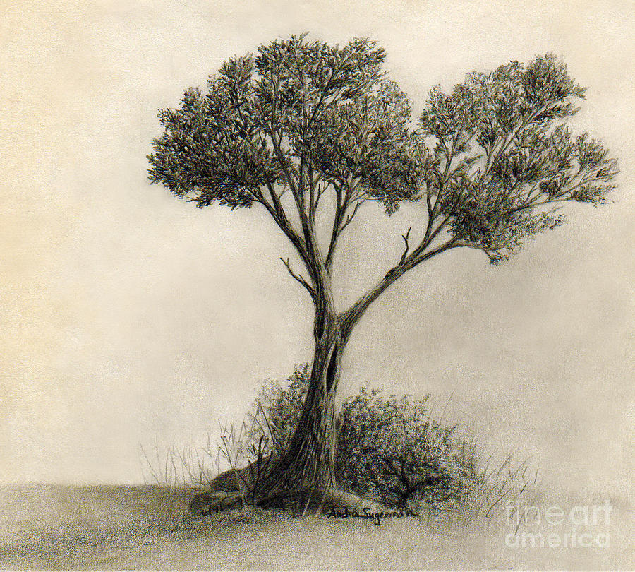 Tree Drawing - The Tree Quietly Stood Alone by Audra D Lemke