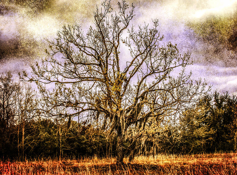 Tree Photograph - The Tree by Steven  Taylor
