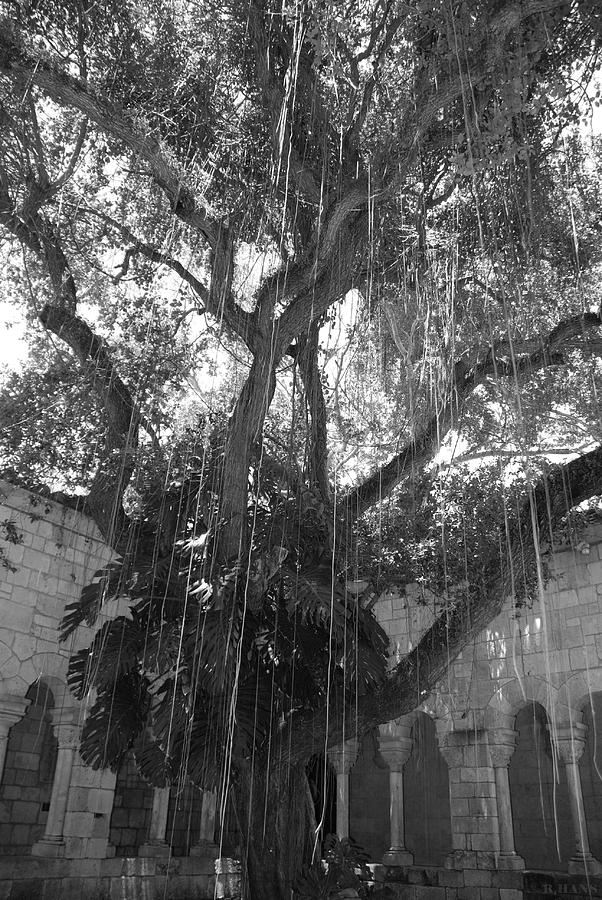 Black And White Photograph - The Tree Vines by Rob Hans