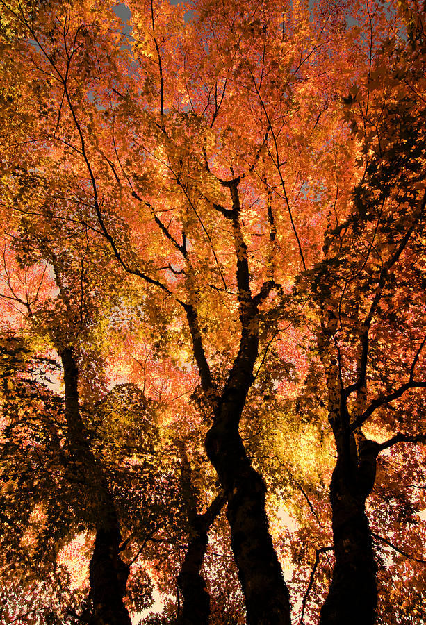Maple Photograph - The Trees Dance As The Sun Smiles by Don Schwartz