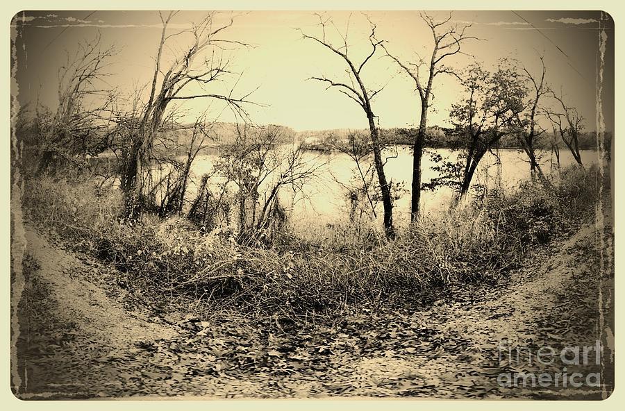 Landscape Photograph - The Trees Of Steamboat Rock by Garren Zanker