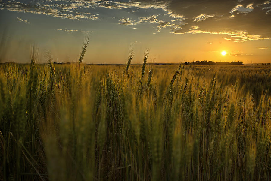 Wheat Photograph - The Turn by Thomas Zimmerman