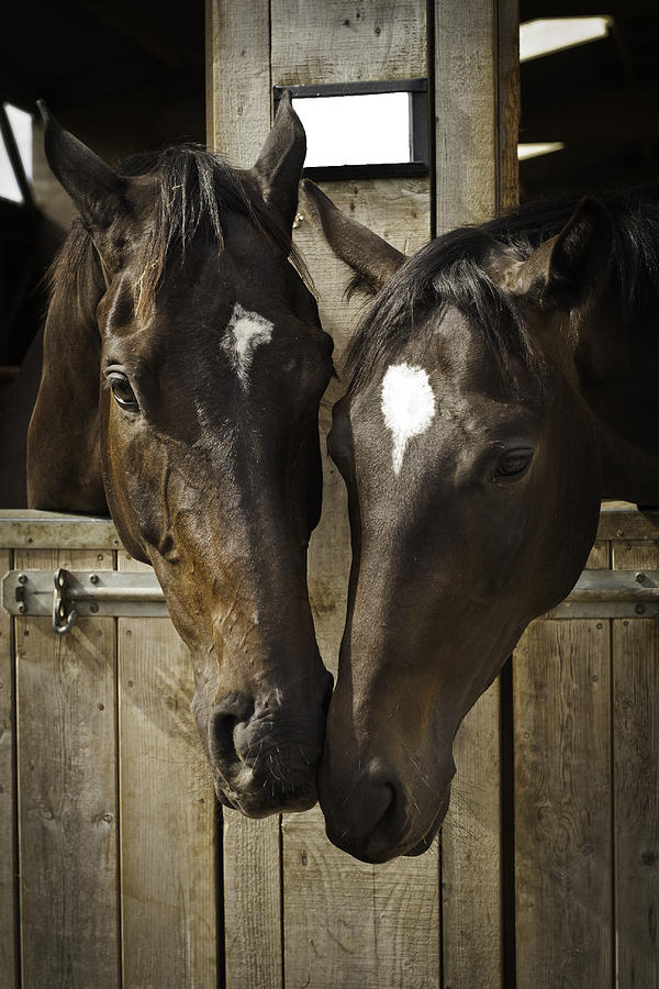 Horses Photograph - The Two Of Us by Lesley Rigg
