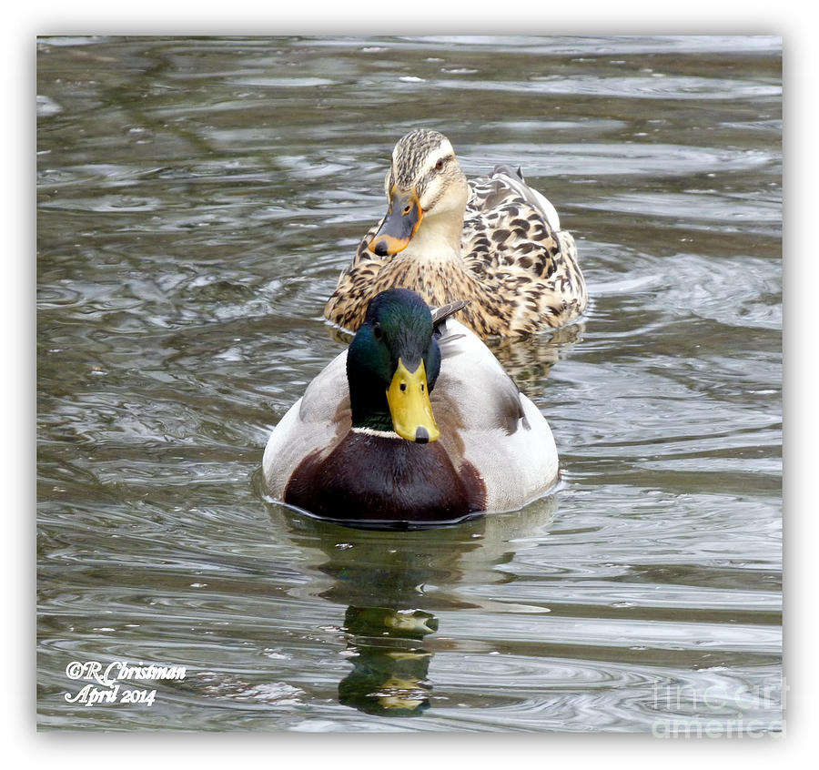 Duck Photograph - The Two Of Us by Rennae Christman