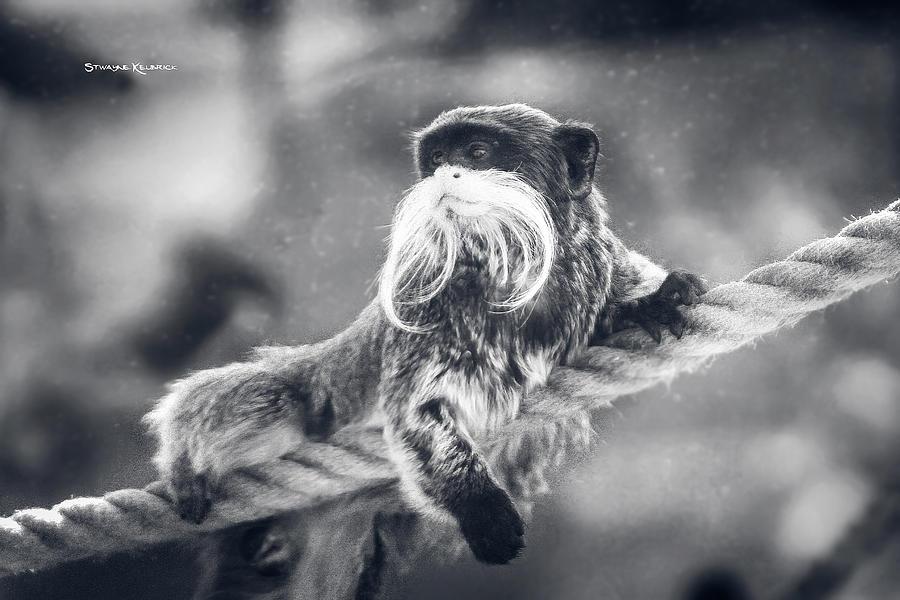 Wildlife Photograph - The unbelievable truth by Stwayne Keubrick