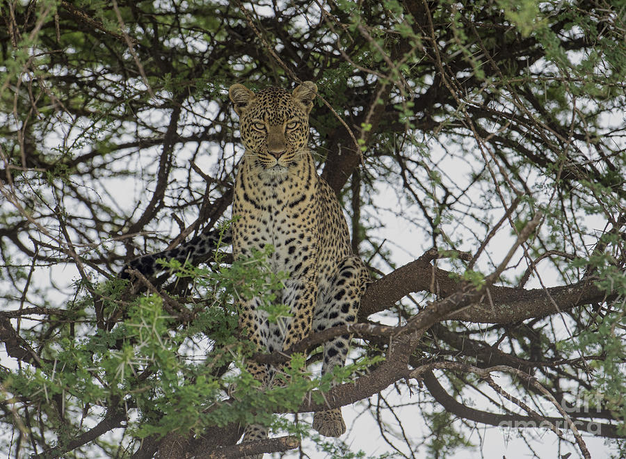 Africa Photograph - The Vantage Point by Sandra Bronstein