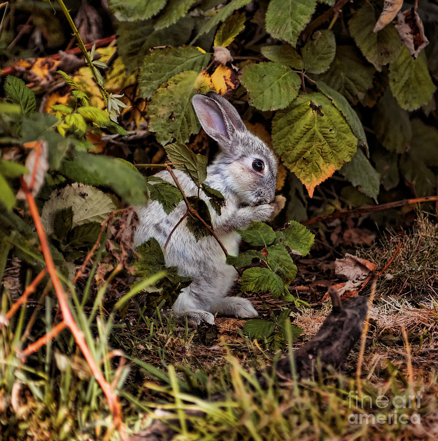 Bunny Photograph - The Velveteen Rabbit by The Soulosphere