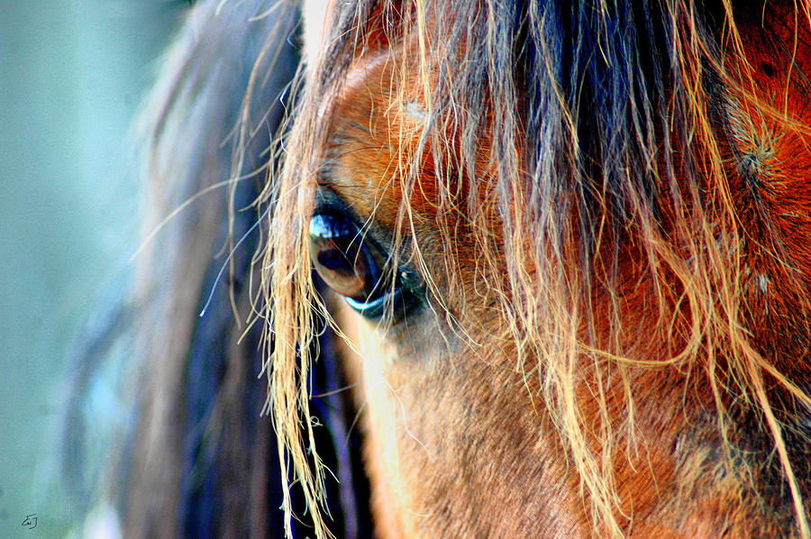 Horses Photograph - The View by Emily Stauring