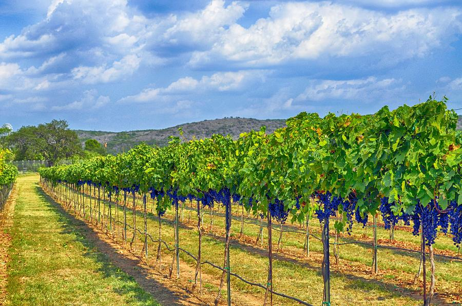 Wine Country Photograph - The Vineyard In Color by Kristina Deane