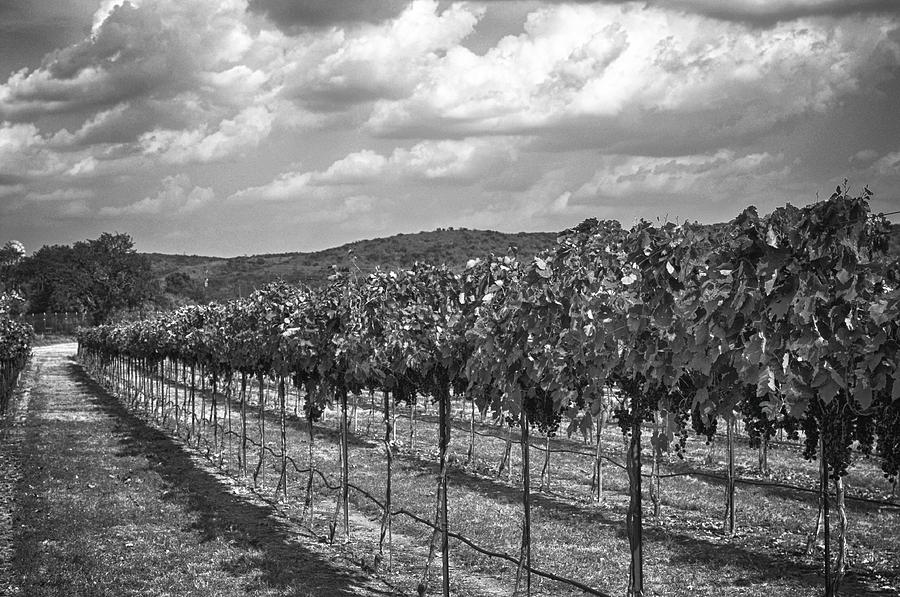 Black And White Vineyard Photograph Photograph - The Vineyard by Kristina Deane