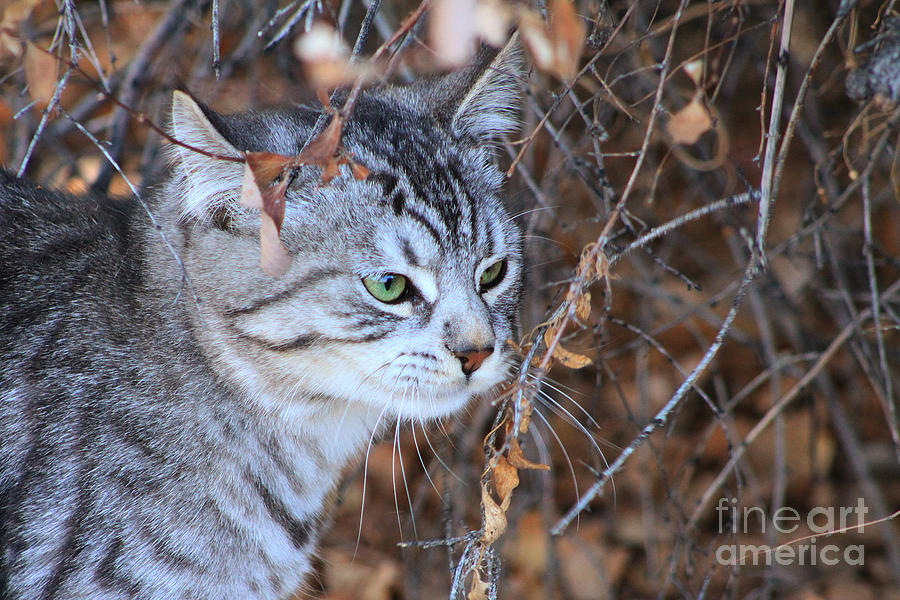 Kitty Photograph - The Visitor by Alyce Taylor