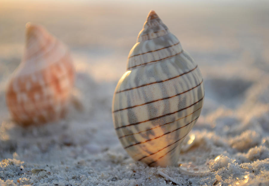 Seashore Photograph - The Voice Of The Sea by Melanie Moraga