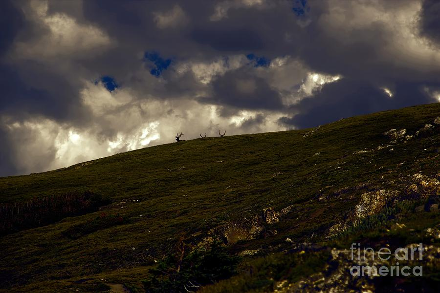 Elk Photograph - The Watchers by Jon Burch Photography