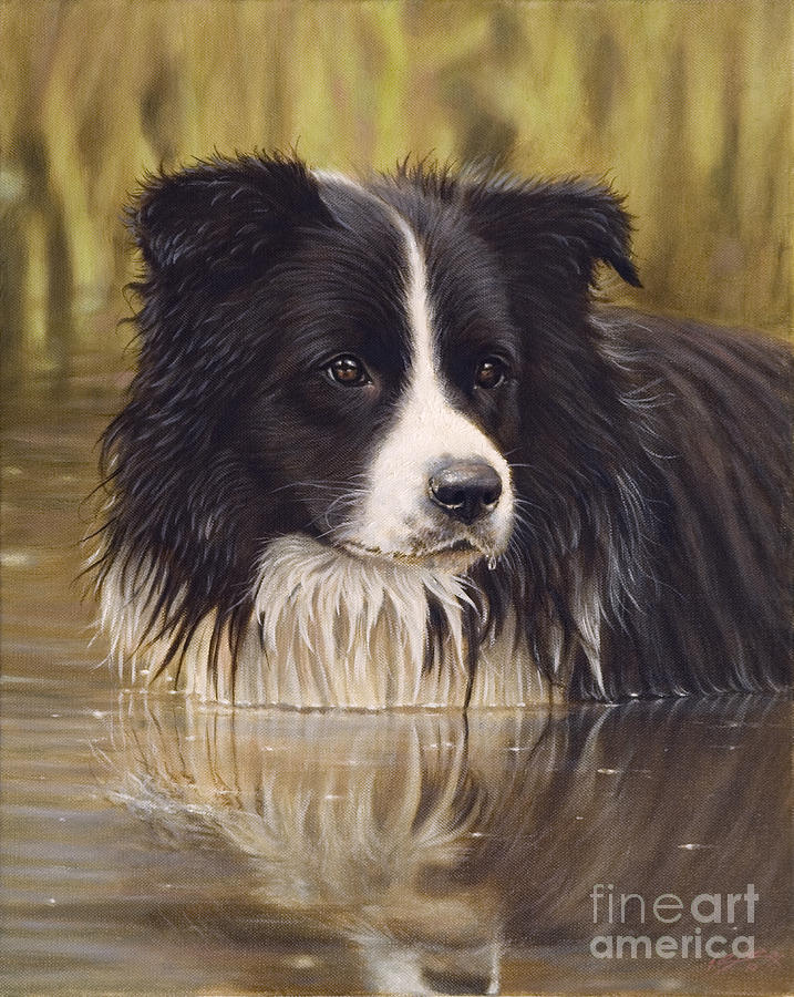 Border Collie Paintings Painting - The Water Baby by John Silver