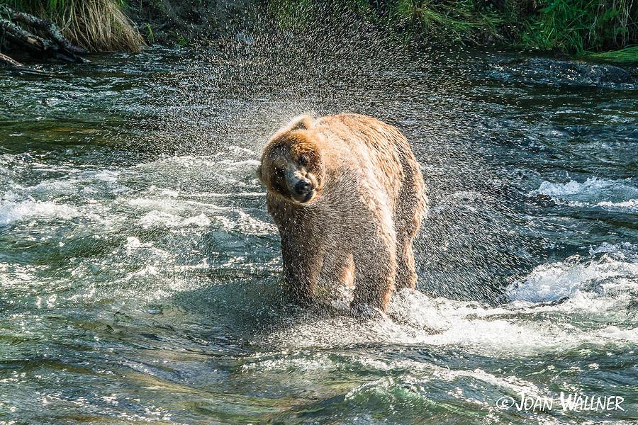 Alaska Photograph - The Water Spray by Joan Wallner