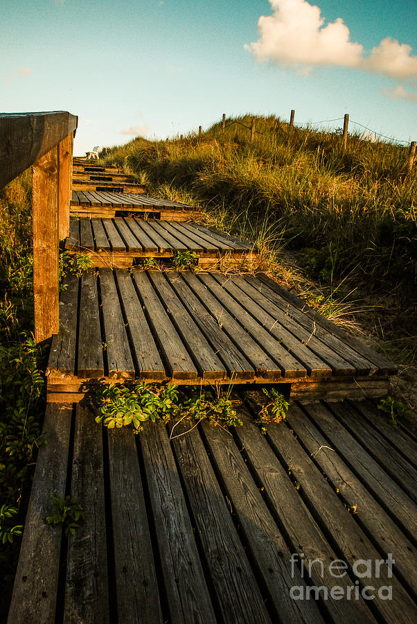 Beach Photograph - The Way To The Sea by Hannes Cmarits