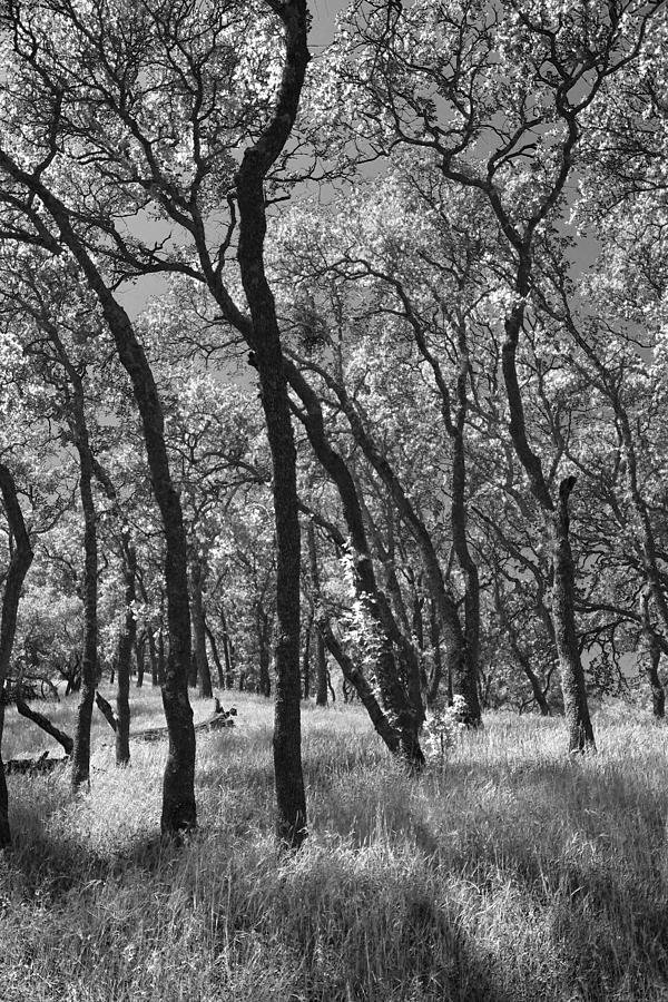Mt. Diablo State Park Photograph - The Way You Move Me by Laurie Search