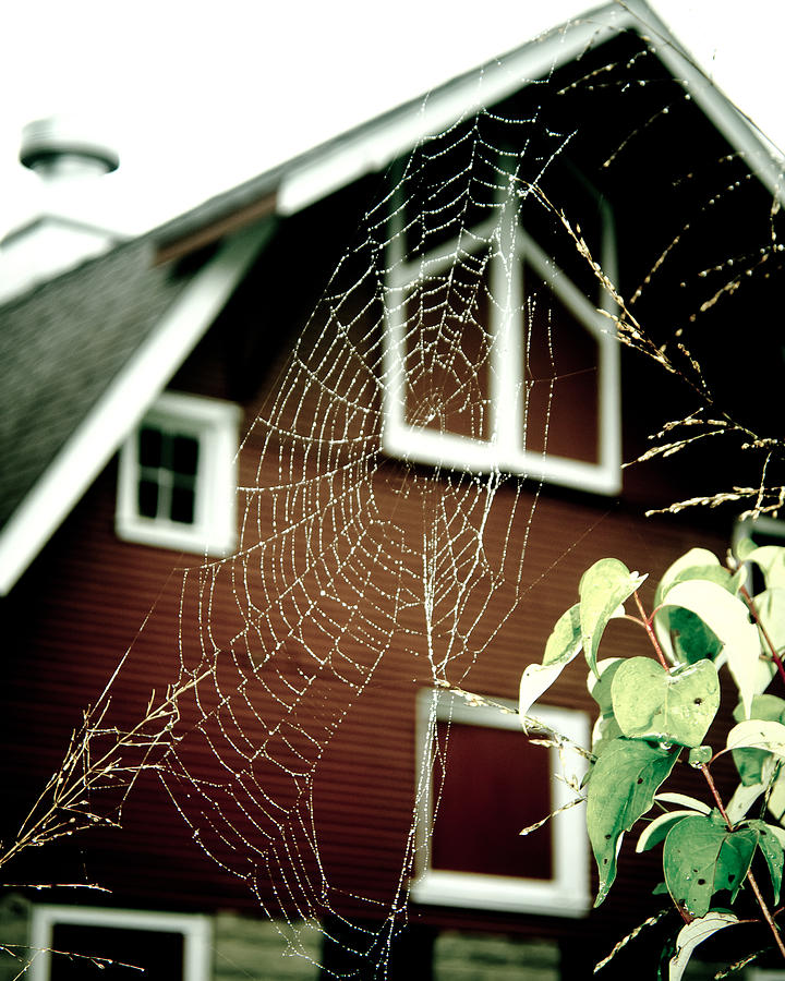 Spiderweb Photograph - The Web by Kristy Creighton
