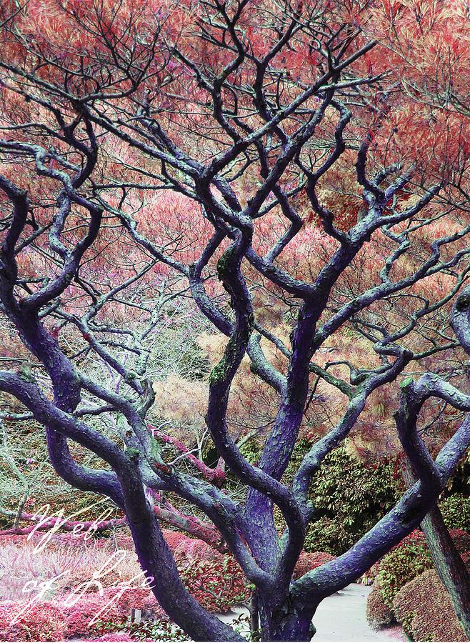 Japan Gardens Digital Art - The Web Of Life by Barbara Bitner