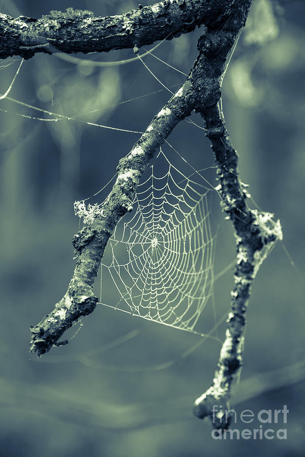 Web Photograph - The Webs We Weave by Edward Fielding