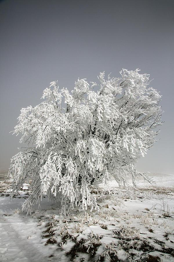 Snow Photograph - The Weight Of Winter by John Haldane