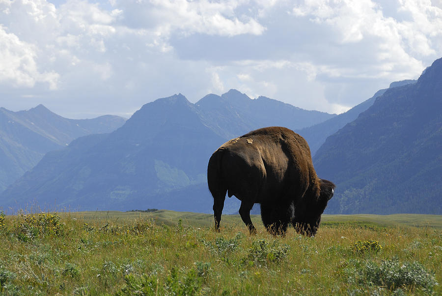Rocky Mountains Photograph - The West - Mountains And Wildlife by Clay and Gill Ross