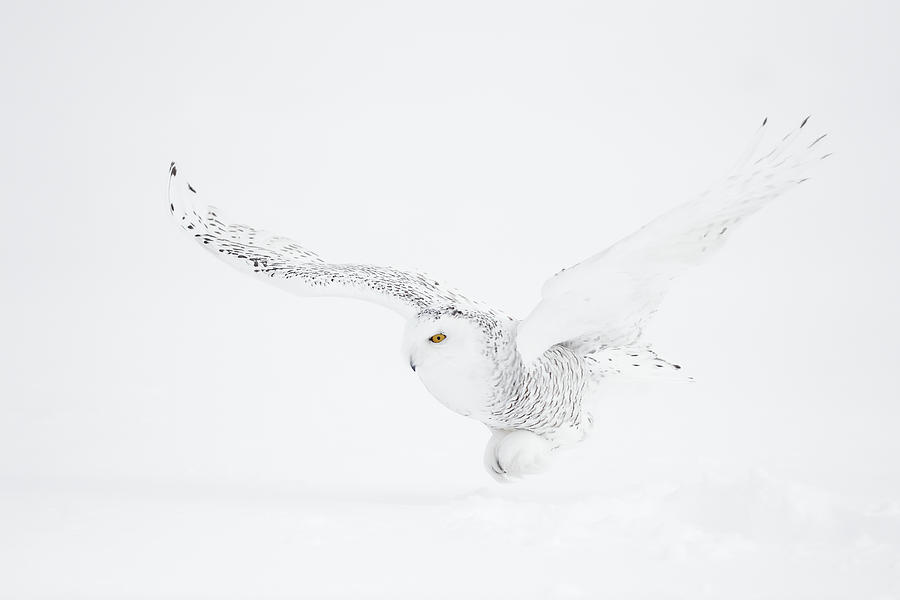 White Photograph - The White Ghost Is Coming by Marco Pozzi