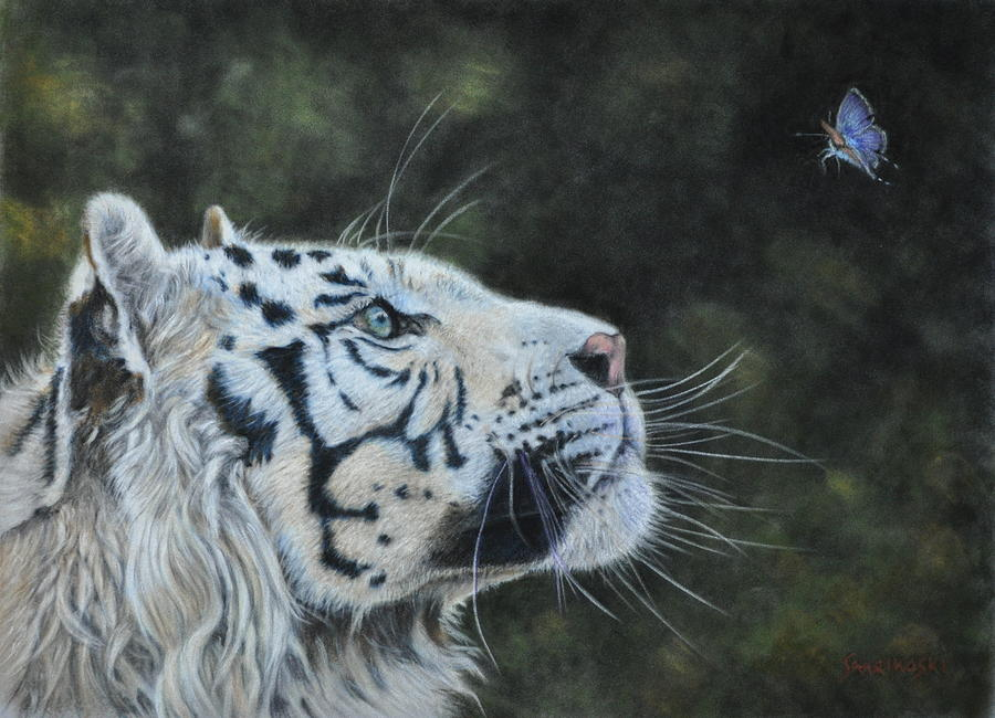 Tiger Painting - The White Tiger And The Butterfly by Louise Charles-Saarikoski