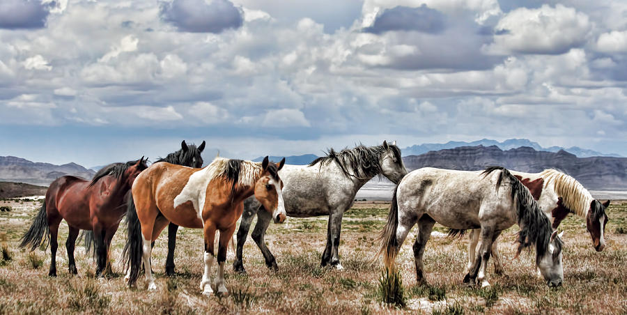 Horse Photograph - The Wild Band by Gene Praag
