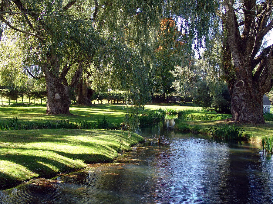 Nova Scotia Photograph - The Willows Of Grand Pre by George Cousins