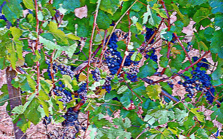 Wine Grapes Digital Art - The Wine Maker I by Ken Evans