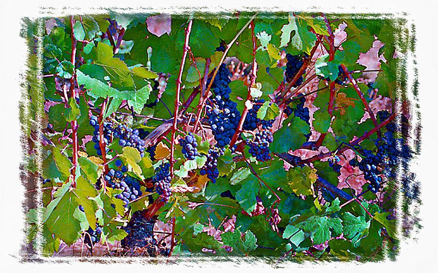 Wine Grapes Digital Art - The Wine Maker II by Ken Evans