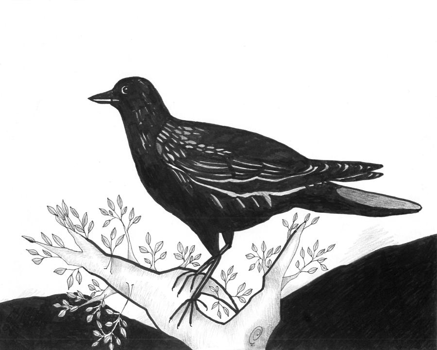 Bird Drawing - The Witness by Helena Tiainen